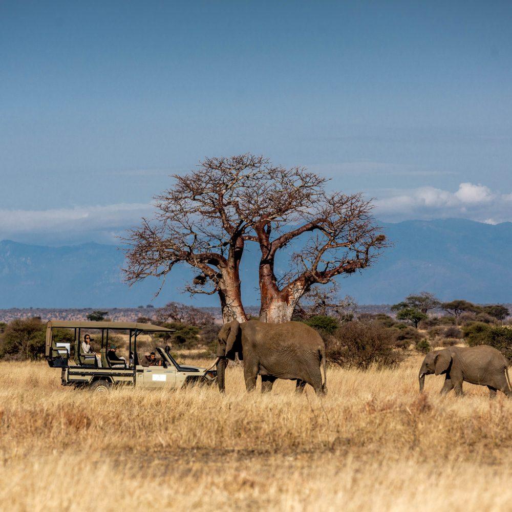 Nimali Tarangire luxury tented lodge in Tanzania