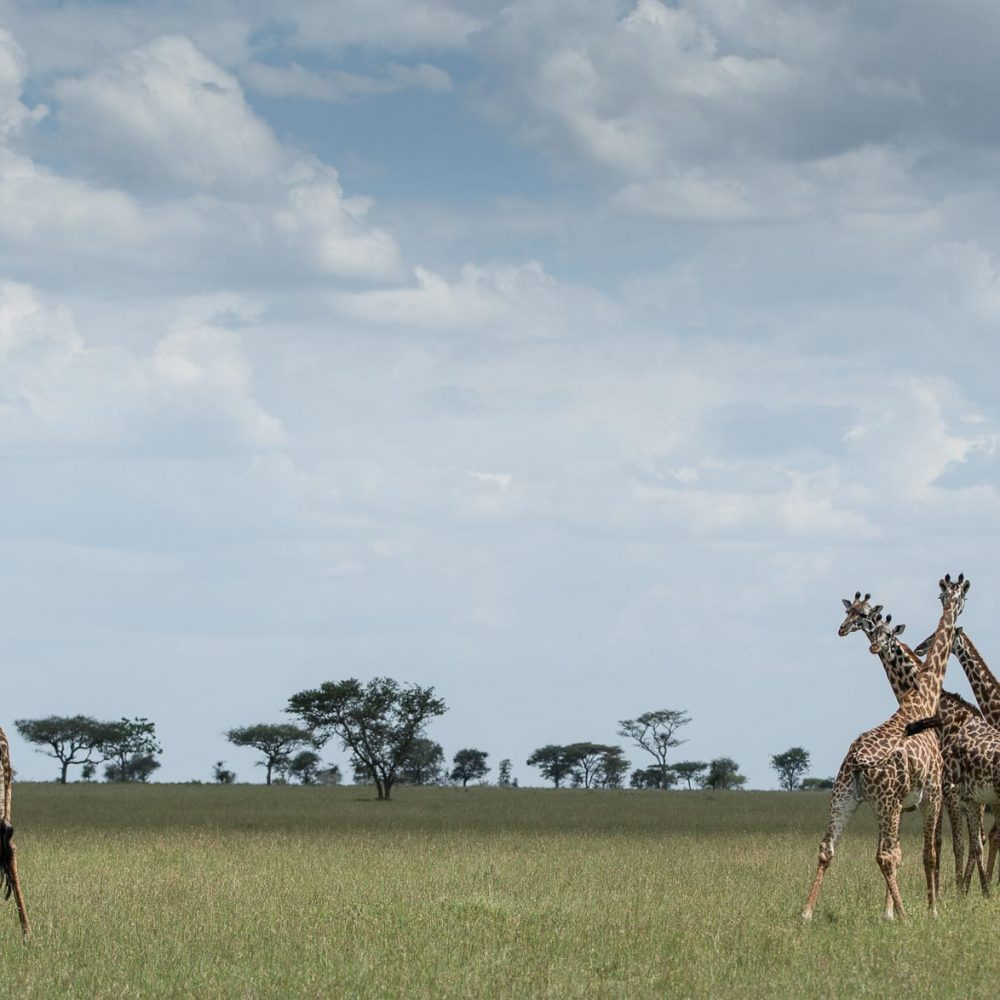 Singita Mara Wildlife
