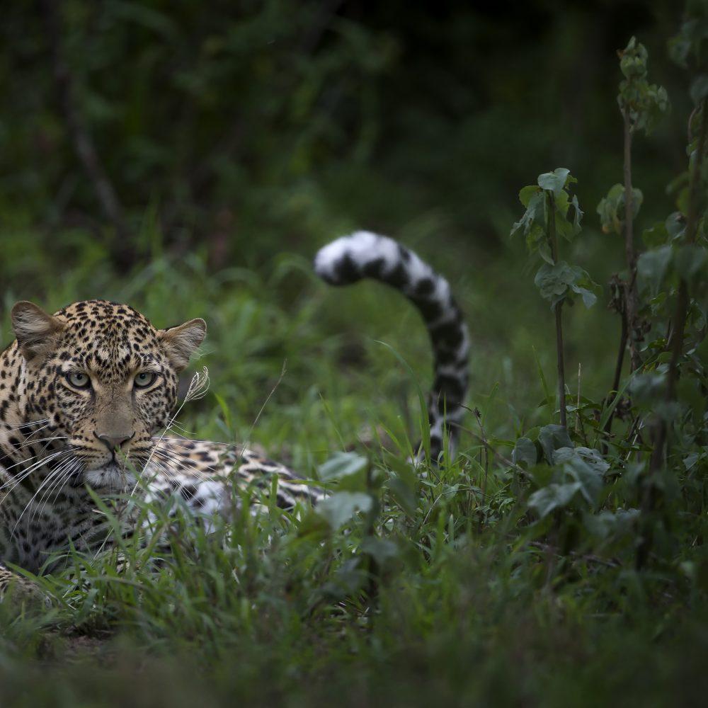 Singita-Serengeti-House-Wildlife6